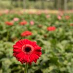 Floriculture 5